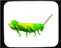 Decorated Mouse Pad with the image of: Grass Hopper